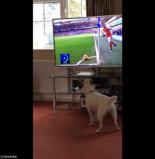 サッカーと犬01