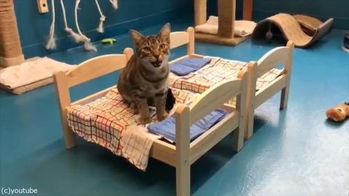 猫にピッタリのベッドを寄付した結果07