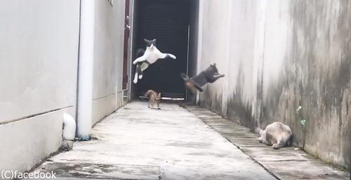 この猫の躍動感よ03