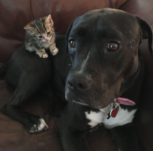 子猫を世話する犬のお母さん02