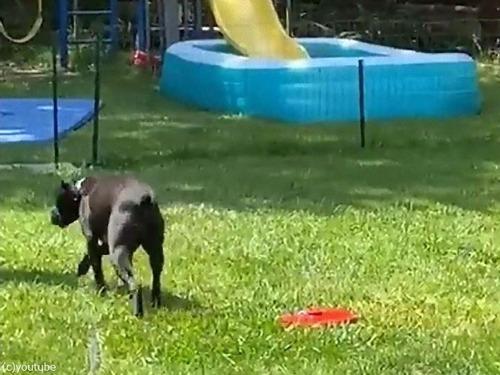 噴水のおもちゃと犬04