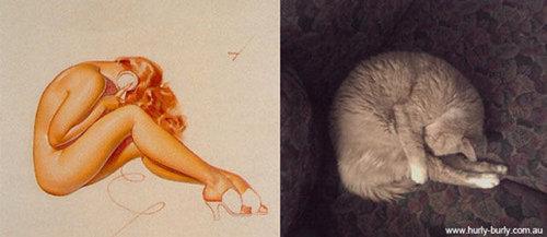 猫のポーズ10