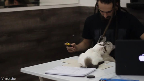 猫が3匹いるところで仕事09
