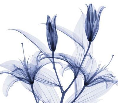 花のレントゲン11