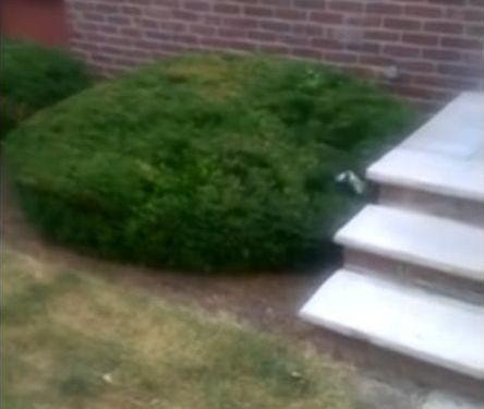 階段が怖い子犬…まさかの方法06