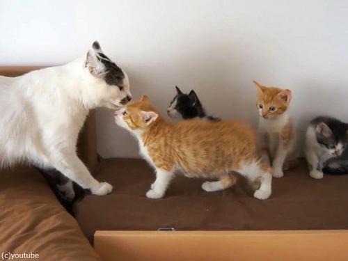 子猫に優しいオス猫00