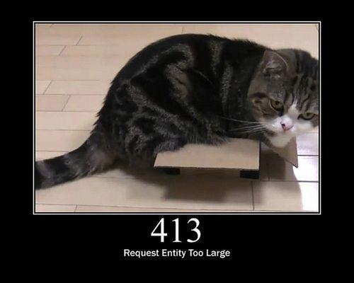 猫でHTTPステータスコード13