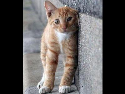 壁ぎわの猫00