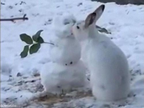 雪だるまの鼻を食べるウサギ04