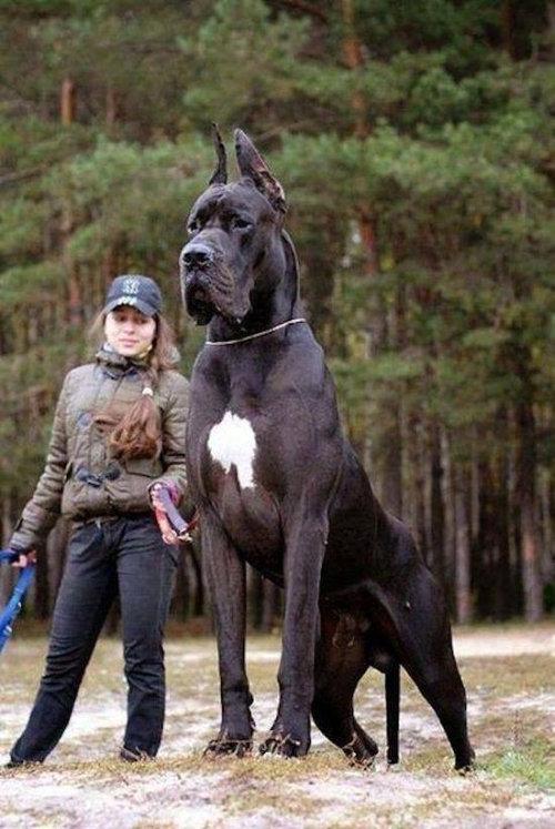 犬を巨大化する写真テクニック12