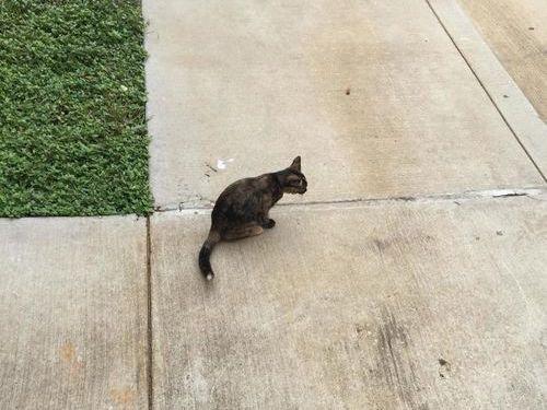 小さな野良猫が猛烈にアピールしてきた00