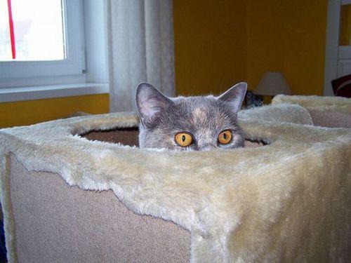 猫は見ている04