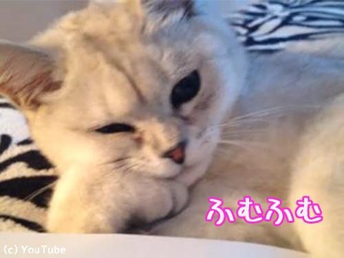頬杖ついて読書する猫00