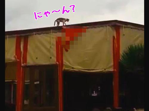 建物の上に猫が歩いてると思ったら…00