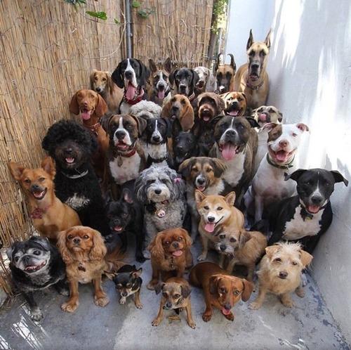 30匹の犬を全員カメラに向かせた01