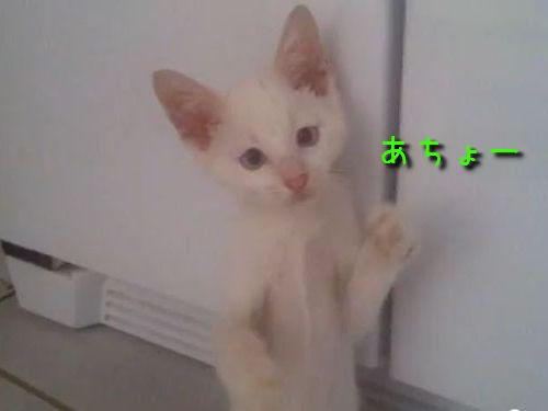猫の拳法使い