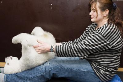 白クマの子供がかわいすぎる08