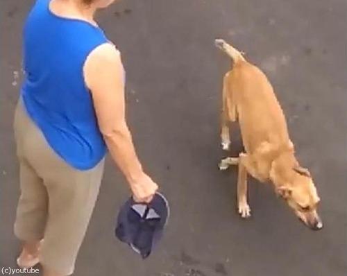 飼い主を守る犬03