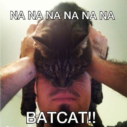 猫でバットマン13