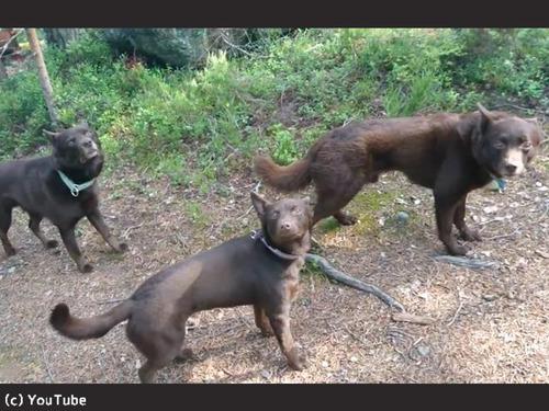 「待て」の精度が驚くほど高い犬00