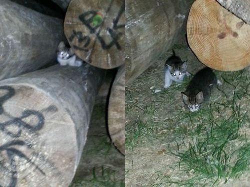 野良猫が子猫03