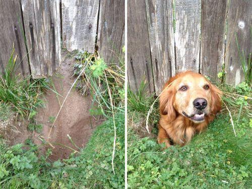壁越しに会いたがる犬たち05