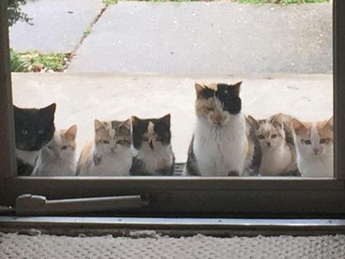 野良猫が家族を連れてきた02