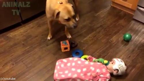 赤ちゃんに蹴られた猫、犬に八つ当たり08