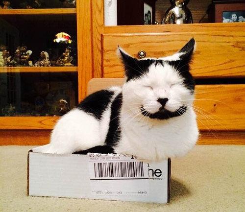 ハッピー猫06