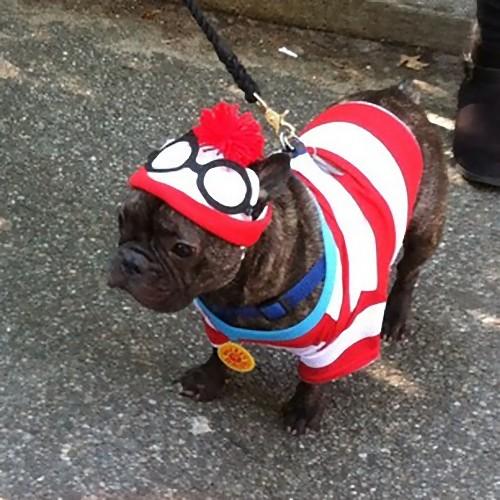 犬のハロウィン16