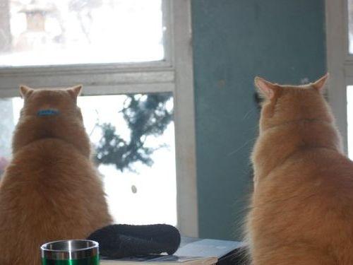猫が鳥を見るポーズ00