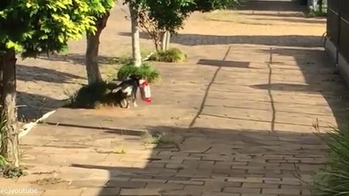 毎日お買いものにやって来る犬03