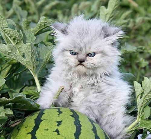 怒ってるけどかわいい動物たち12