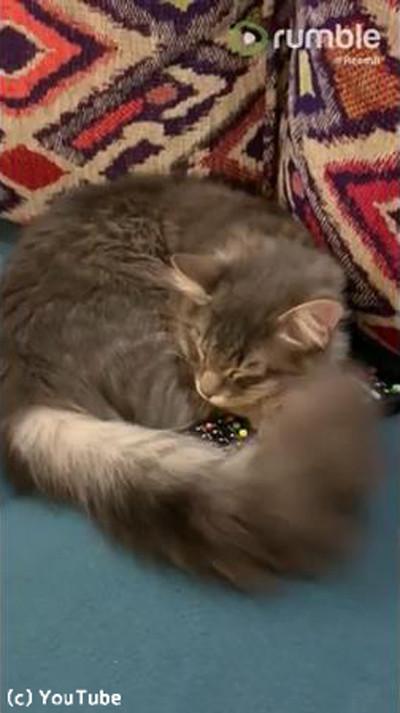 アレを抱き枕にする猫04