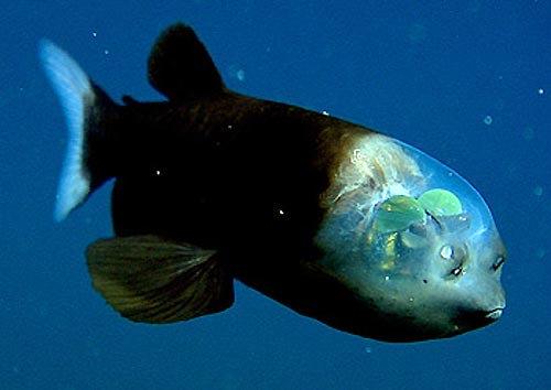 深海の生き物08