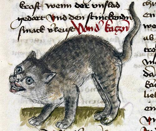 中世の絵画に登場する「猫」06