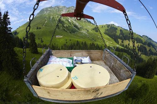 スイス・チーズ19