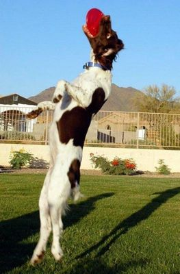 犬の身体能力凄い12