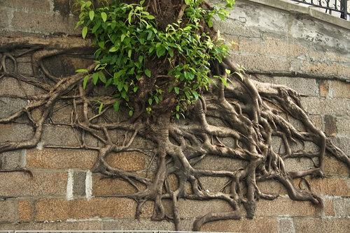 木の生命力11