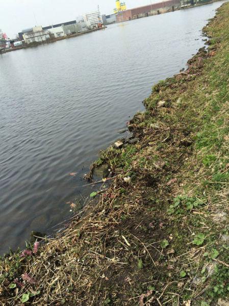 オランダの川辺をゴミ掃除16