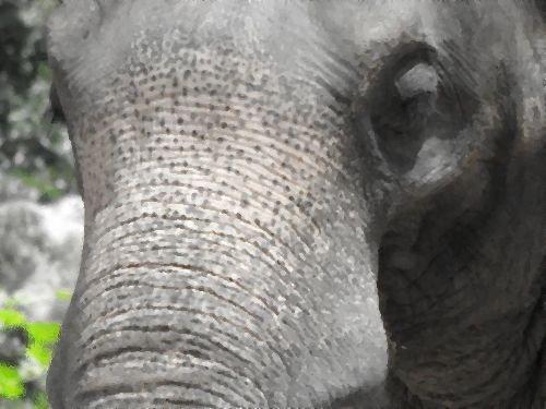 50年間インドで監禁されていたゾウが救出される00