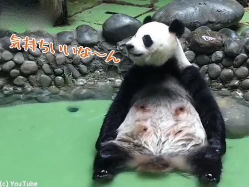 パンダの入浴風景が完全に人間00