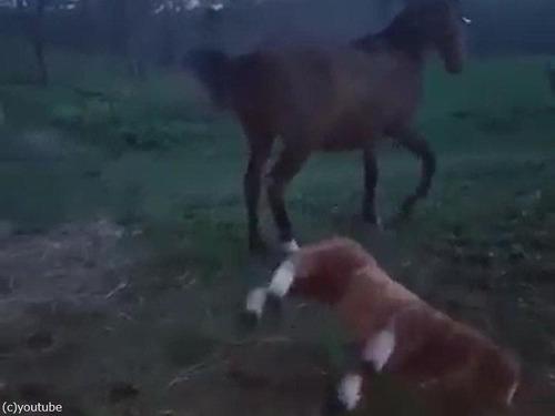 馬とぬいぐるみの馬06