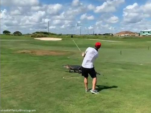 ワニの目の前でゴルフを続行する04