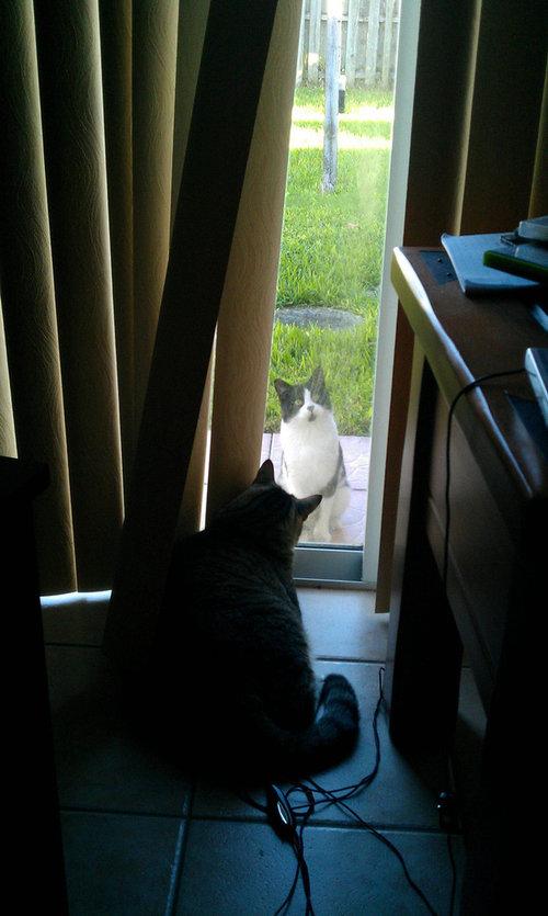 密談する猫たち12