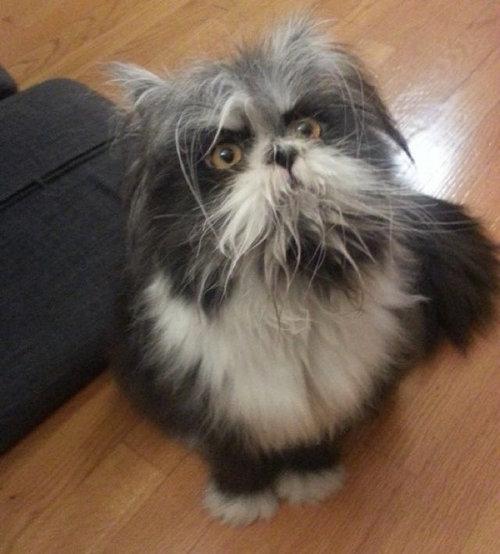 威厳ある猫07