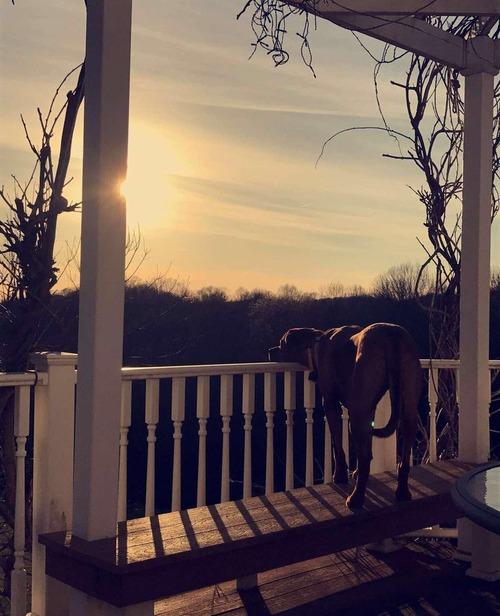 夕日を毎日見つめる犬01