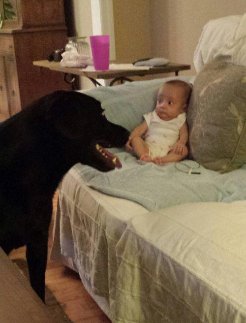 初めて妹と犬が対面した日01