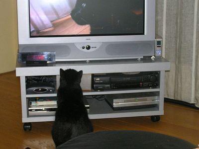猫の番組を見つめる猫00