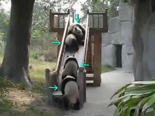 パンダの巻き添えすべり台